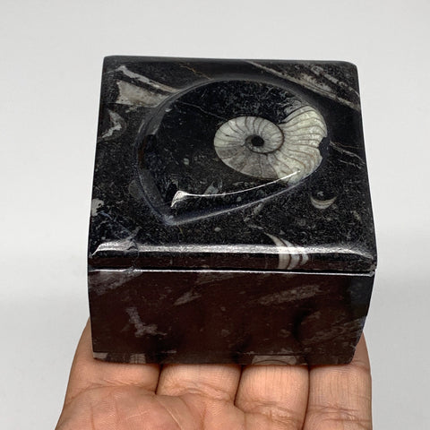 "256g, 2.5""x1.9"", Fossils Ammonite Orthoceras Square Jewelry Box @Morocco,F2673"