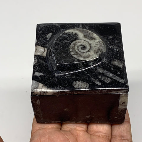 "254.5g, 2.5""x1.9"", Fossils Ammonite Orthoceras Square Jewelry Box @Morocco,F2695"