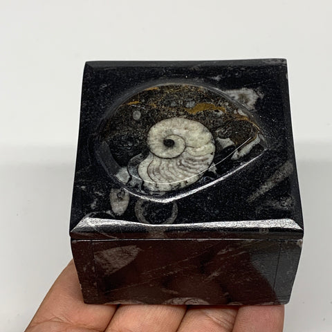 "261.9g, 2.5""x1.9"", Fossils Ammonite Orthoceras Square Jewelry Box @Morocco,F2696"