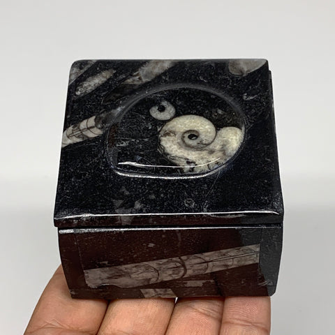 "271.2g, 2.5""x1.8"", Fossils Ammonite Orthoceras Square Jewelry Box @Morocco,F2701"