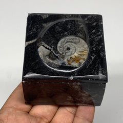 "254.6g, 2.5""x1.9"", Fossils Ammonite Orthoceras Square Jewelry Box @Morocco,F2703"