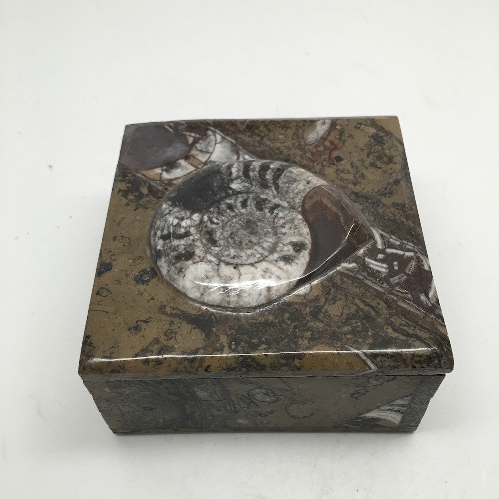470g Square Shape Orthoceras Fossil Ammonite Brown Jewelry Box @Morocco, FJ55 - watangem.com
