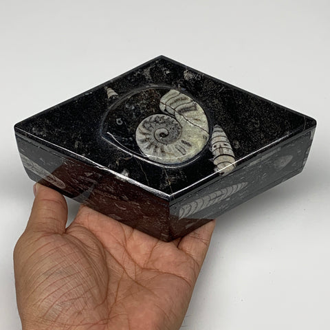 "520g, 6.25""x3.7""x2.2"", Brown Fossils Ammonite Jewelry Box Marquise @Morocco,F276"