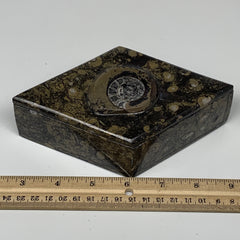 "514g, 6.3""x3.7""x2.1"", Brown Fossils Ammonite Jewelry Box Marquise @Morocco, F276"