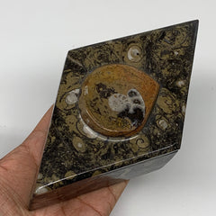 "548g, 6.5""x3.7""x2.1"", Brown Fossils Ammonite Jewelry Box Marquise @Morocco, F277"