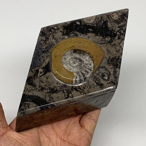 "522g, 6.5""x3.8""x2"", Brown Fossils Ammonite Jewelry Box Marquise @Morocco, F2771"
