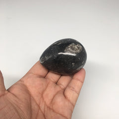 "162.3g, 2.3""x1.8"" Hand Polished Fossil Orthoceras Stone Egg from Morocco,FE69"