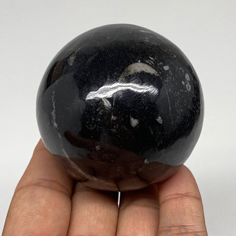 "291.8g, 2.4"" (59mm) Black Fossil Orthoceras Stone Sphere  from Morocco, F1861"