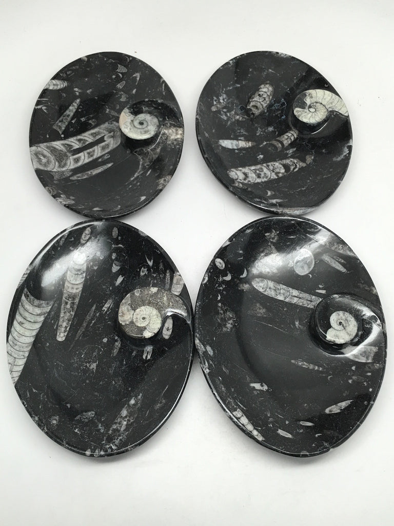 "4pcs Lot Oval Black Orthoceras Fossils Small Bowls @Morocco,6.5"" x4.8"", FPS14 - watangem.com"