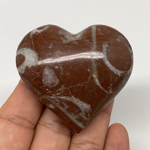 "88.3g,2""x2.2""x1""Natural Untreated Red Shell Fossils Heart Reiki Energy,F935"