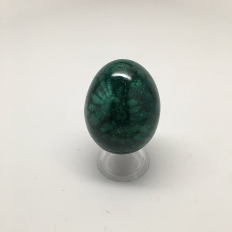 166.8 Grams Shiny Glassy Polished Green Natural Malachite Egg from Congo,D795