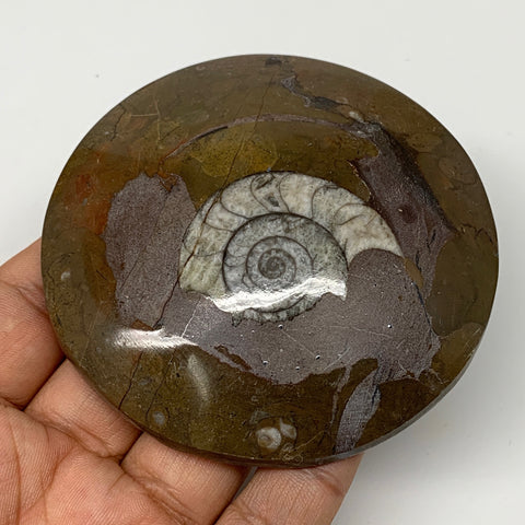 "141.4g, 3.2""x3.2""x0.7"", Button Ammonite Polished Mineral from Morocco, F2120"
