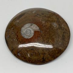 "141.6g, 3.1""x3.1""x0.7"", Button Ammonite Polished Mineral from Morocco, F2123"