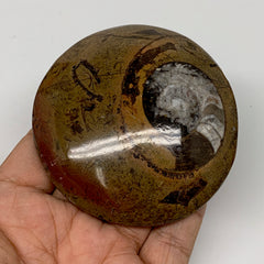 "136.3g, 3.1""x2.9""x0.7"", Button Ammonite Polished Mineral from Morocco, F2126"