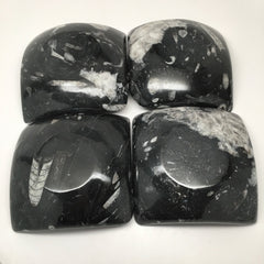 "4 pcs Lot, 4.75"" Square Black Orthoceras Fossils Small Dishes @Morocco, MF1114 - watangem.com"