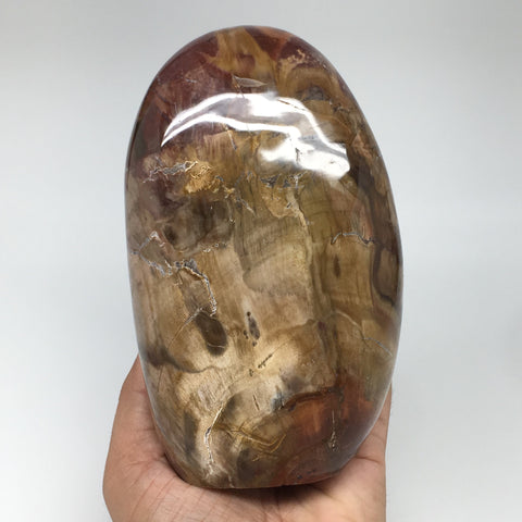 "1222g, 5.7""x3.5""x2.3"" Natural Petrified Wood Freeform Polished Gemstones, B926"