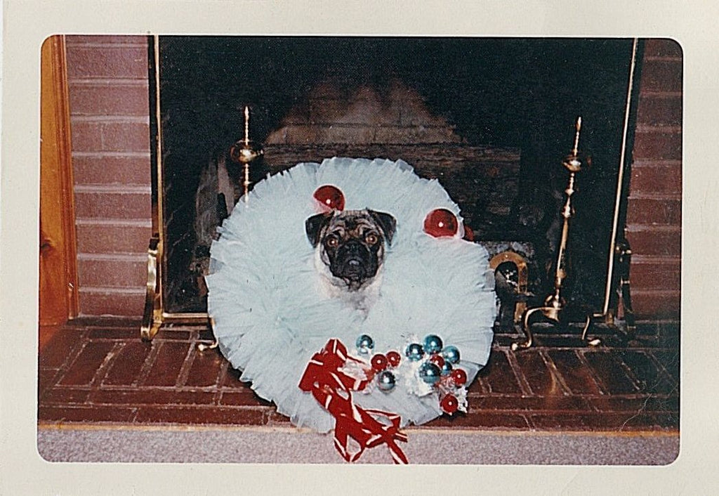 Vintage Christmas Pug dog picture
