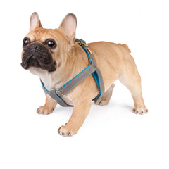 Dog Harness in Soft Zinc Leather with Wool felt - lurril