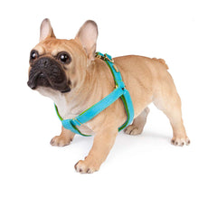 Dog Harness in Soft Turquoise Leather with Wool felt - lurril