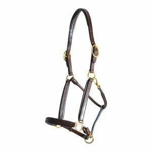 Personalized Padded Leather Halter - CarouselHorseTack.com