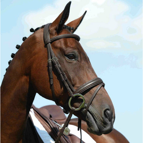 Collegiate Syntovia + Padded Raised Flash Bridle