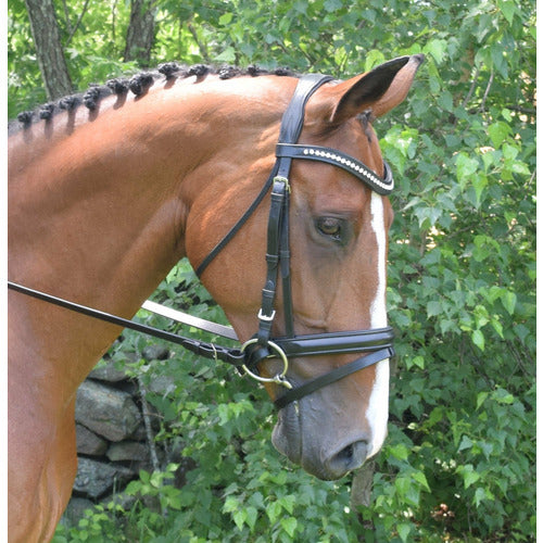Black Oak by KL Select Magnolia Dressage Bridle
