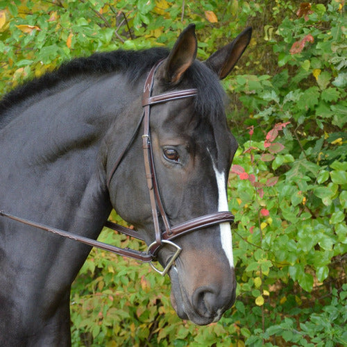 Black Oak by KL Select Cyprus Bridle