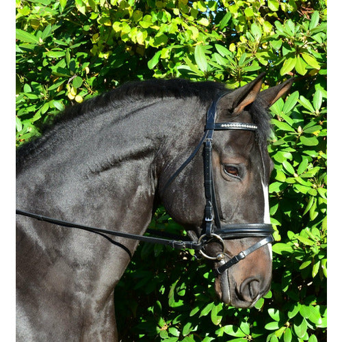 Black Oak by KL Select Larkspur Dressage Bridle - CarouselHorseTack.com