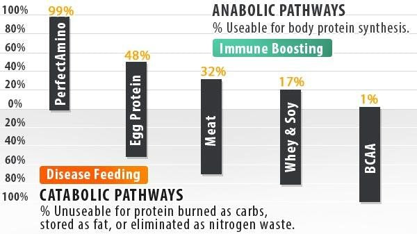 Body Protein Synthesis Chart - The Anabolic vs. Catabolic response of common dietary proteins including PerfectAmino
