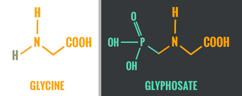 BodyHealth - Glycine vs. Glyphosate - Why Glyphosate is so dangerous in our bodies