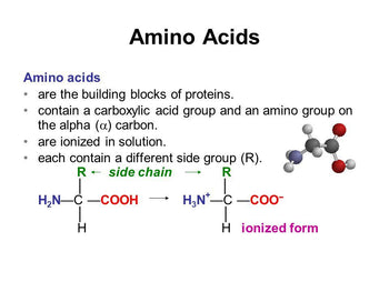 How Your Body Uses Amino Acids As Building Blocks