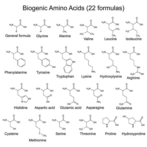 List of all 22 Amino Acids and the 8 Essential Amino acids it takes to build Body Proteins