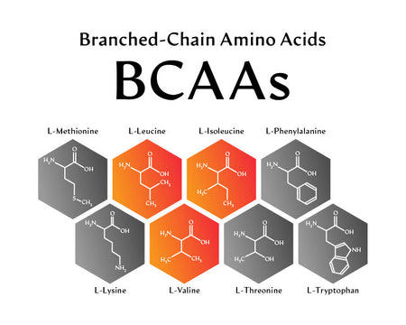 List Of The 3 BCAAs Branched Chain Amino Acids