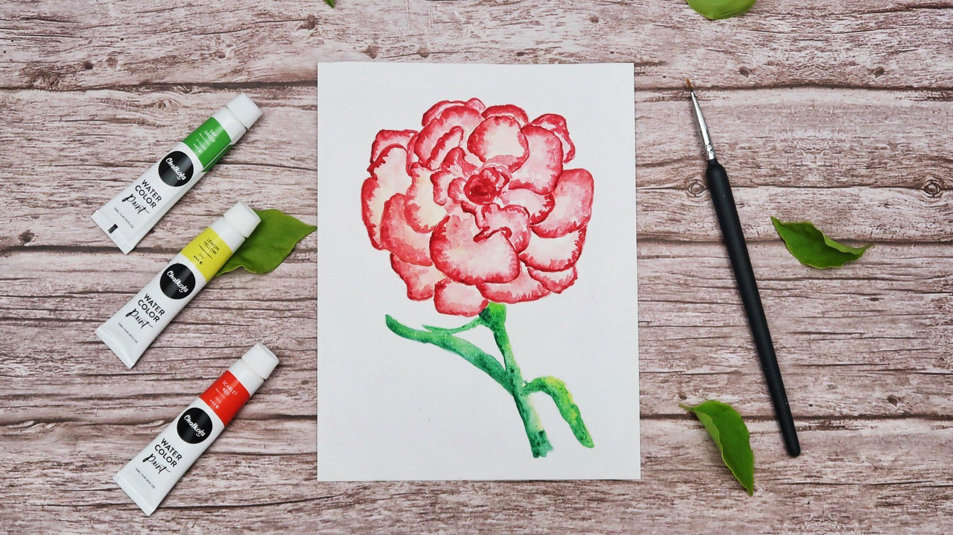 Paint a Carnation Using Watercolor | Chalkola Art Supply