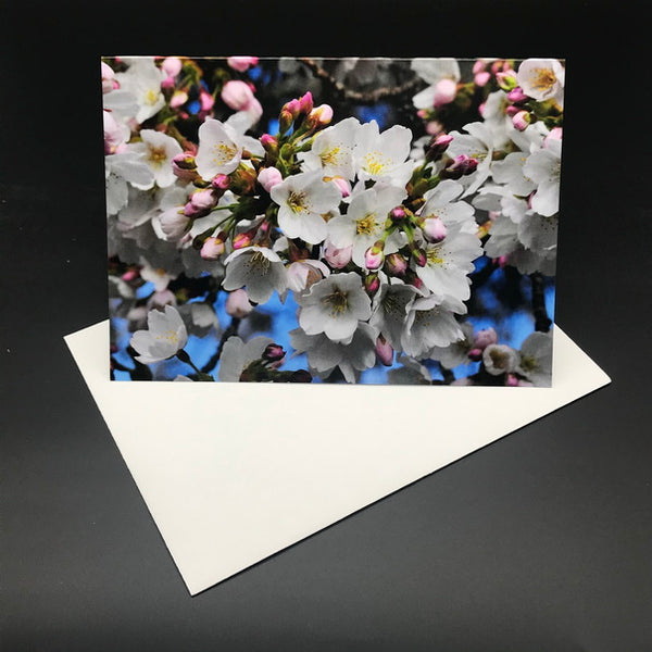 White Blossom Blue Greeting Card