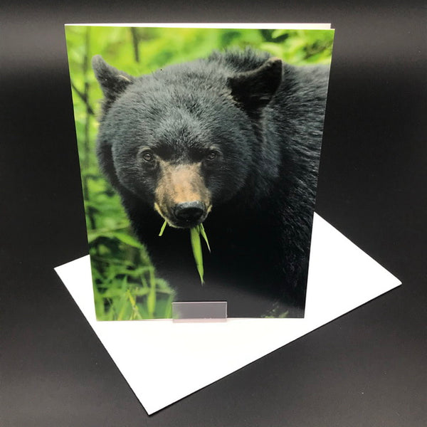 Black Bear Greeting Card