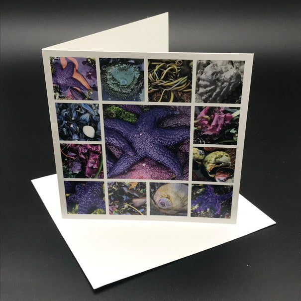 West Cost Tidepools Greeting Card
