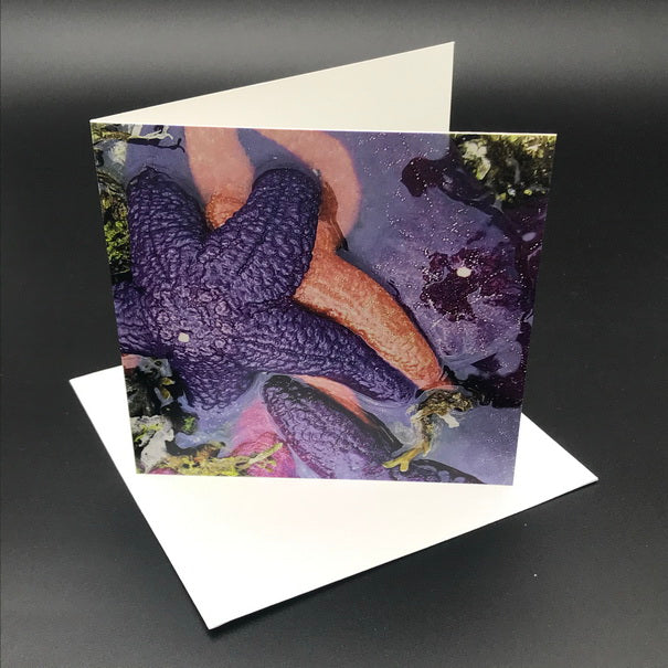 Starfish from the Sea ll Greeting Card