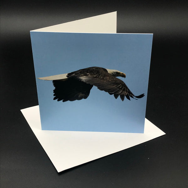 Eagle ll Greeting Card