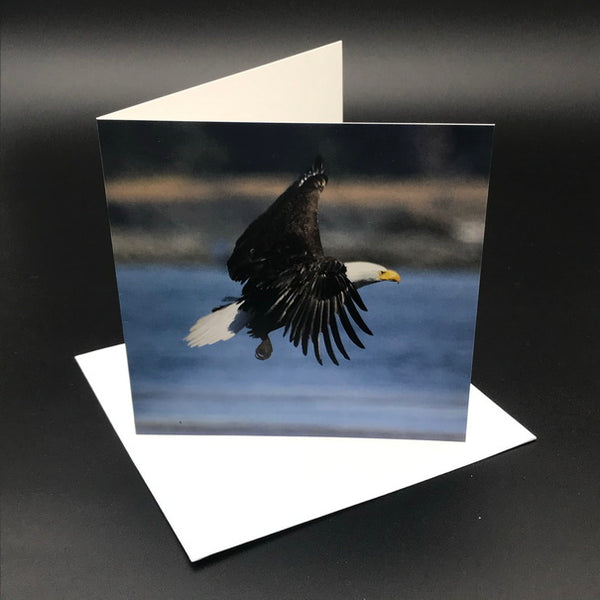 Eagle l Greeting Card