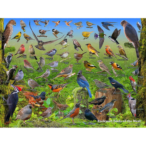 LAMINATED BACKYARD BIRD POSTER - Side Street Studio