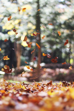 Inspiration | Falling for Fall