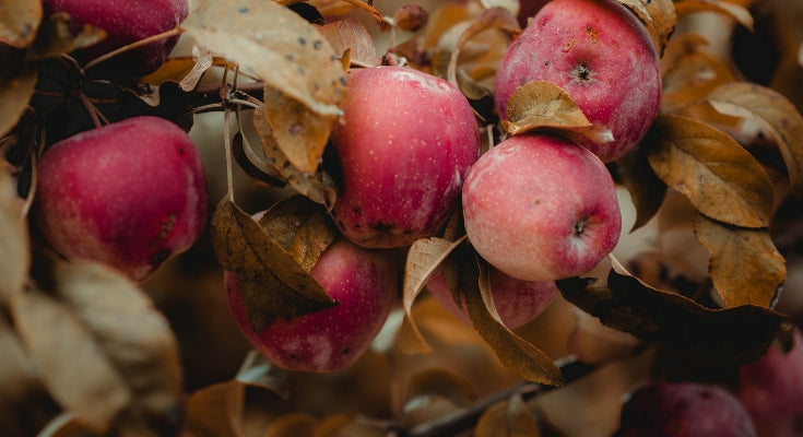 fall orchard apples | boho mommy blogger | bohemian jewelry