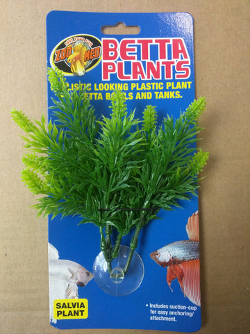 Betta Plants Salvia Plant