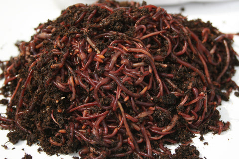 50 Redworms