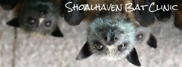 shoalhaven bat clinic