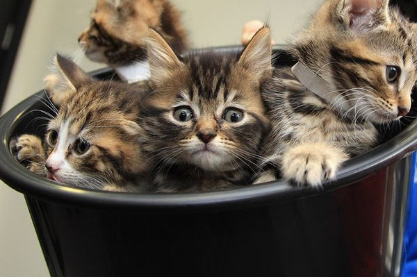 abandoned cats (Image: Getty)