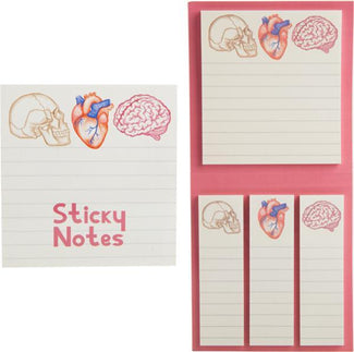 Anatomy | STICKY NOTES