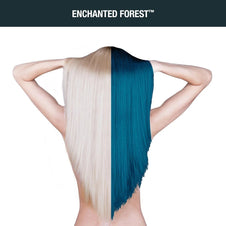 Enchanted Forest | AMPLIFIED COLOUR