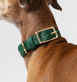 Classic Hunter Green Leather Collar